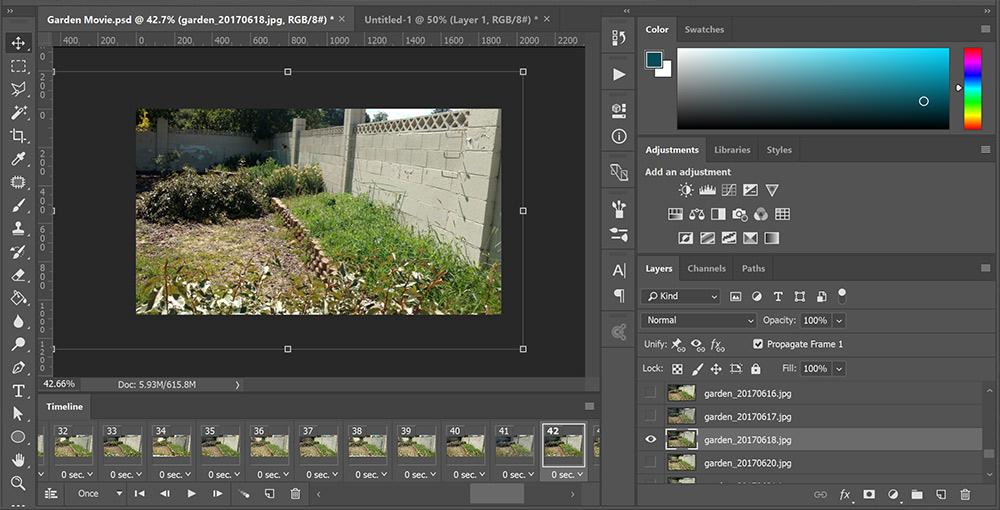 Garden Timelapse Movie: In Progress