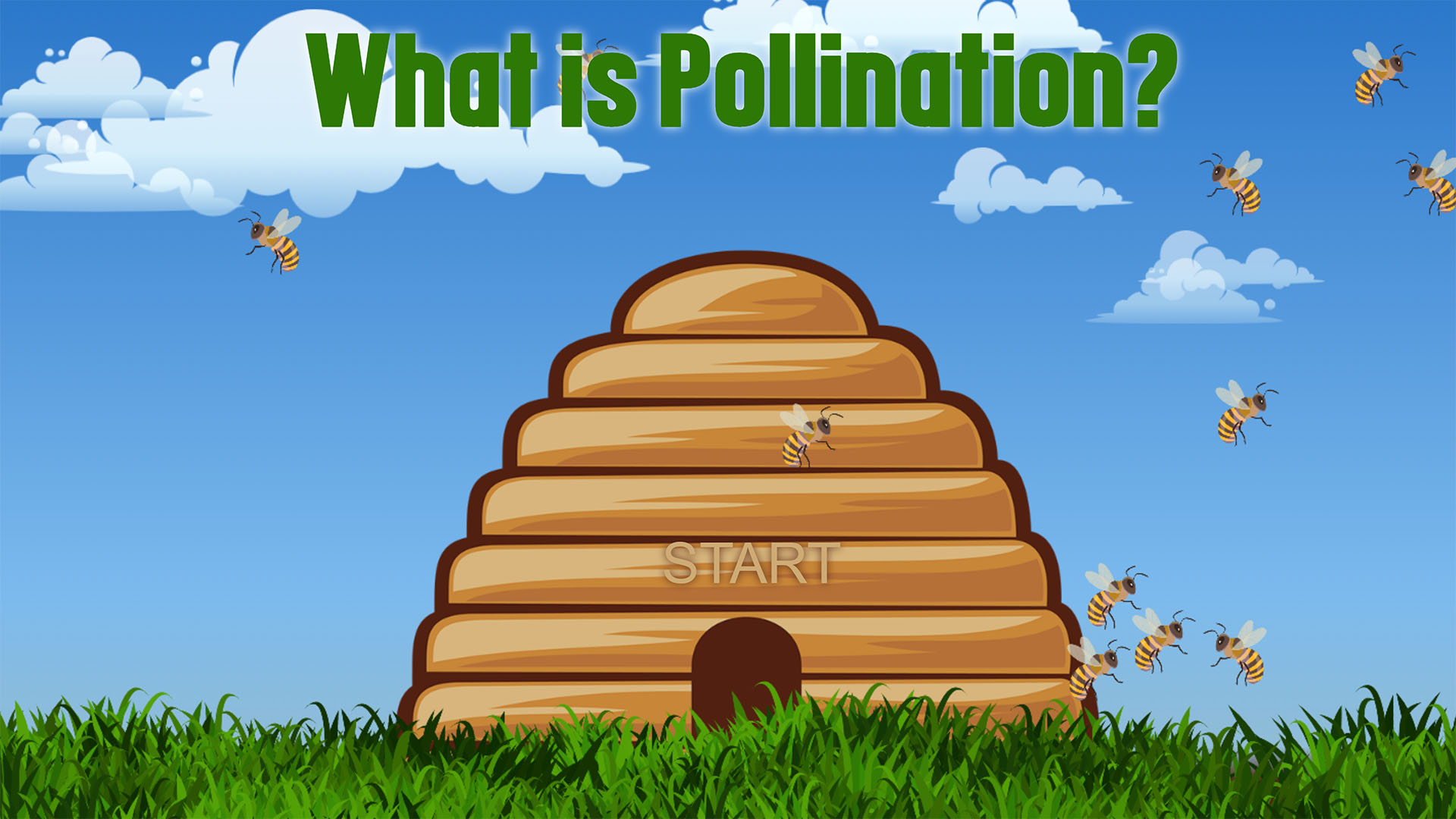 What's the Buzz: Pollination