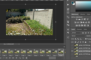 Garden Timelapse Movie: In Progress